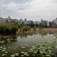 Lac au parc de Ueno