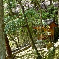 Jardin du temple Kinkaku-ji à Kyoto