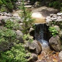 Parc de Momijidani, sur l'île de Miyajima