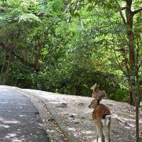 Promenade nature sur l'île de Miyajima