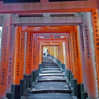 Torii au sanctuaire Fushimi Inari